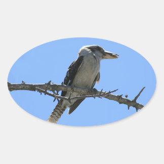 Kookaburra Oval Sticker