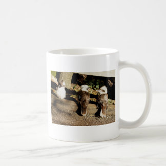 Kookaburra Trio Coffee Mug
