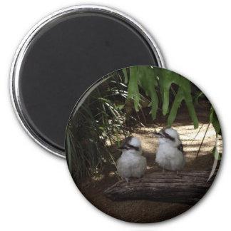 Kookaburras Laughing 6 Cm Round Magnet
