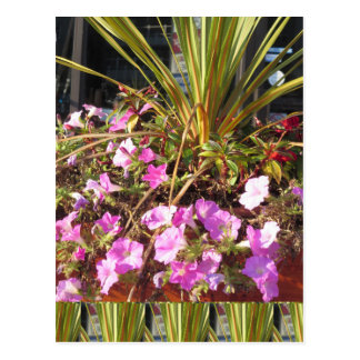 KOOL flowers grass giveaway RETURN GIFTS for party Postcard