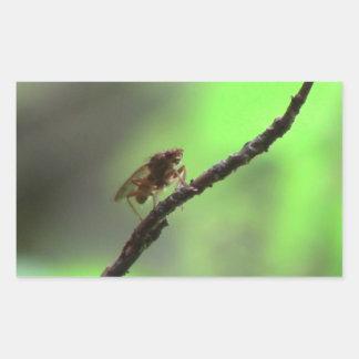 Kooskooskia Idaho Insects Arachnids Spiders Rectangular Sticker