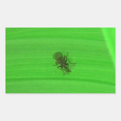 Kooskooskia Idaho Insects Arachnids Spiders Stickers