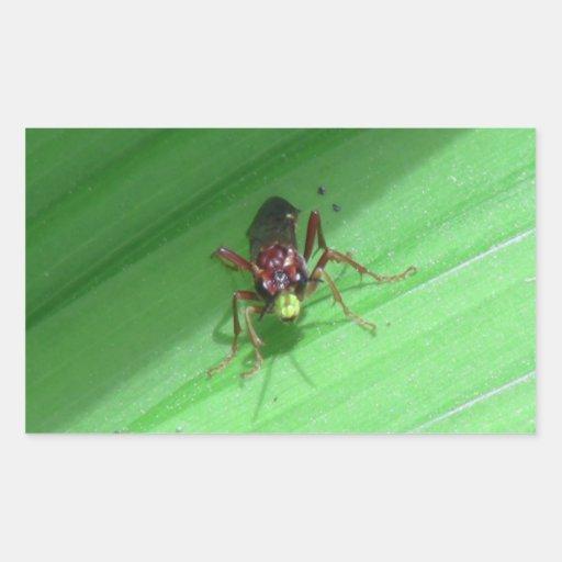 Kooskooskia Idaho Insects Arachnids Spiders Rectangle Stickers