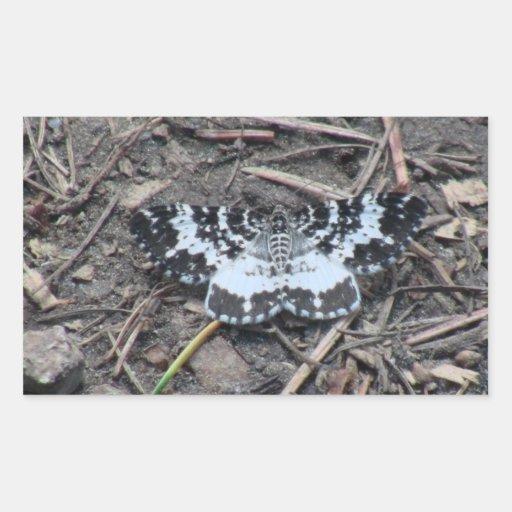 Kooskooskia Idaho Insects Arachnids Spiders Rectangular Stickers