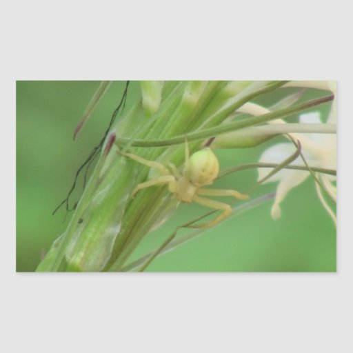 Kooskooskia Idaho Insects Arachnids Spiders Sticker