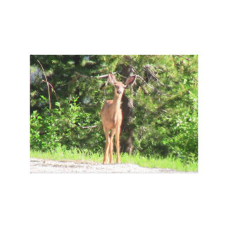 Kooskooskia Idaho Mammals Deer Animals Chipmunk Gallery Wrapped Canvas