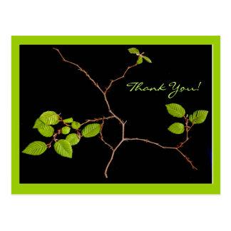 Korean Hornbeam bonsai thank you Postcards