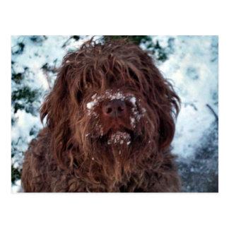 Korthals Griffon - Snowy Sarah Postcard