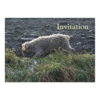 Korthals Griffon - Tsjip roaming the land 5x7 Paper Invitation Card