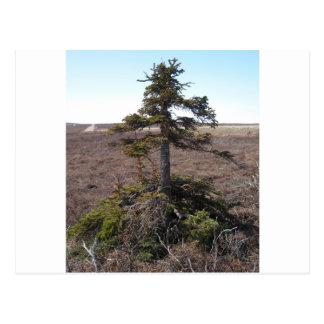 kotz shrub in alaska postcard