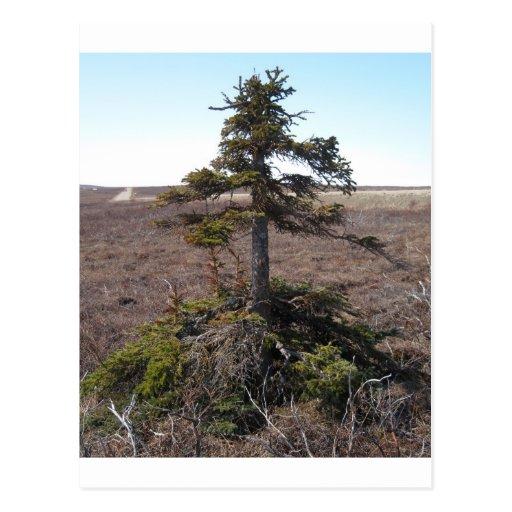 kotz shrub in alaska post card