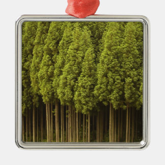 Koya Sugi Cedar Trees Christmas Ornament