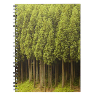 Koya Sugi Cedar Trees Notebook
