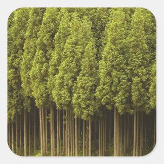 Koya Sugi Cedar Trees Square Sticker