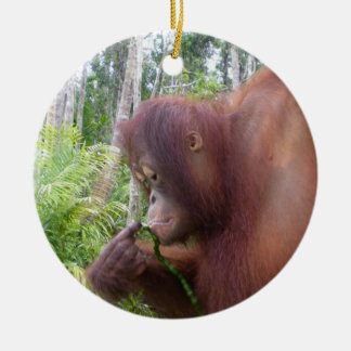 Krista Orangutan in Borneo Round Ceramic Decoration