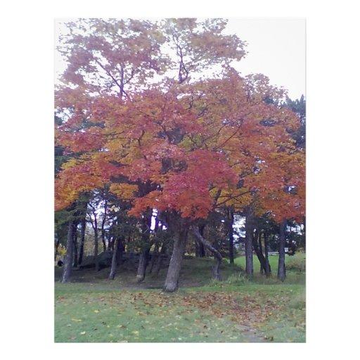 Kristiansten Festning høst tree.jpg Flyer Design