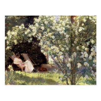 Kroyer's Les Roses Post Cards