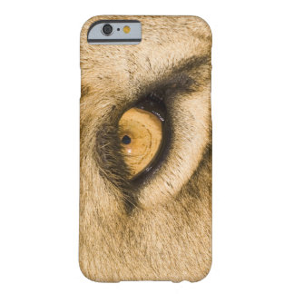 Kruger National Park, Limpopo Province, South Barely There iPhone 6 Case