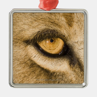 Kruger National Park, Limpopo Province, South Christmas Ornament