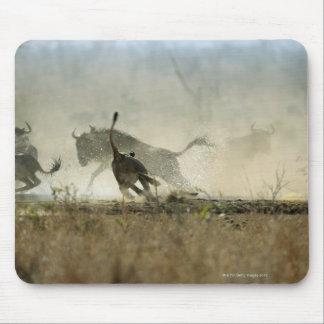 Kruger National Park, Mpumalanga Province, South 3 Mouse Mat