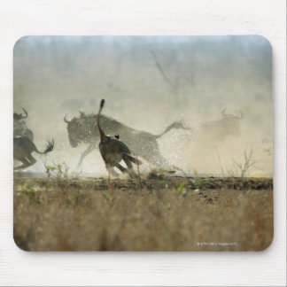 Kruger National Park, Mpumalanga Province, South 3 Mousepad