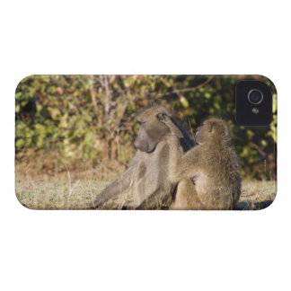 Kruger National Park, South Africa iPhone 4 Case-Mate Cases