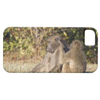 Kruger National Park, South Africa iPhone 5 Case
