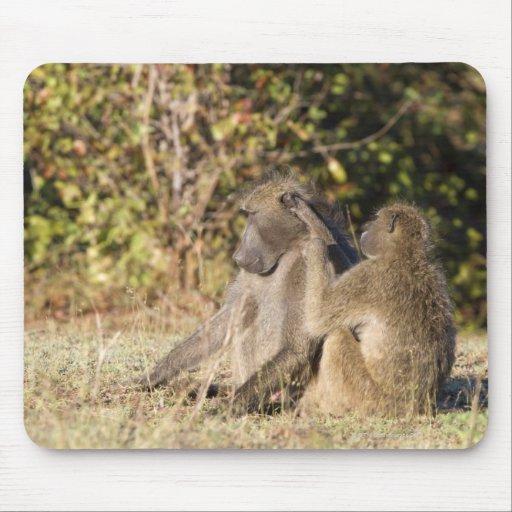 Kruger National Park, South Africa Mousepad