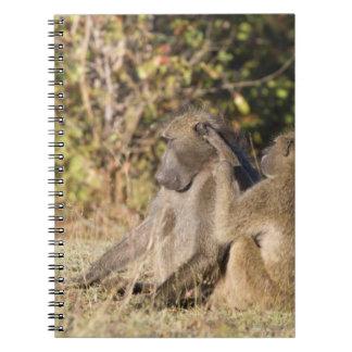 Kruger National Park, South Africa Spiral Note Books