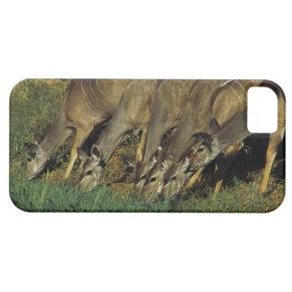 Kudu drinking , Chobe National Park , Botswana Barely There iPhone 5 Case