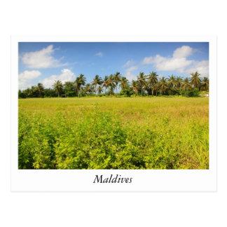 Kulhudhufushi Island Maldives Postcard