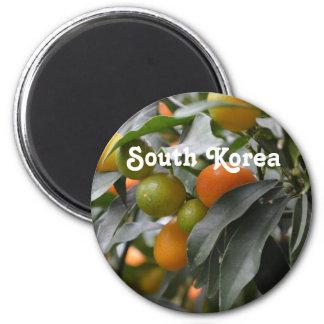 Kumquats from South Korea Magnets