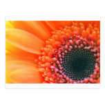 Kunstfoto Blume Rainbow Postkarte