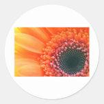 Kunstfoto Blume Rainbow Stickers