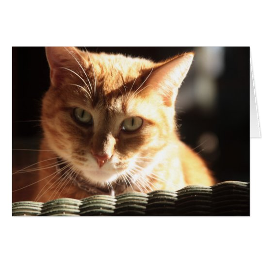 Kute Kitty! Card