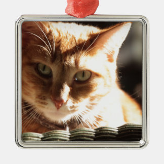 Kute Kitty! Christmas Ornament