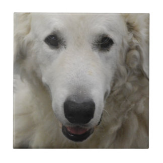 Kuvasz Dog Breed  Tile