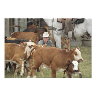 Kyle waiting with calf during round-up, photo art