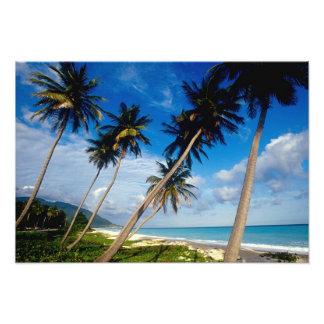 La Samana Peninsula, Dominican Republic, 2 Photo Art