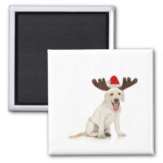 Lab Puppy Wearing Antlers Magnet