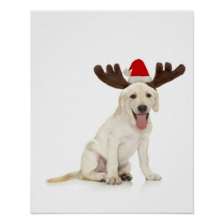 Lab Puppy Wearing Antlers Poster