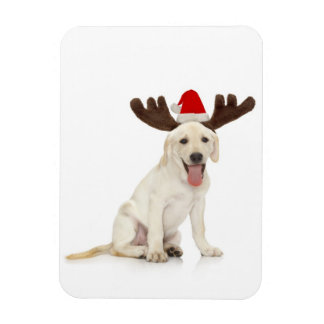 Lab Puppy Wearing Antlers Rectangle Magnet