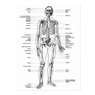 Labeled Skeleton Diagram Postcard