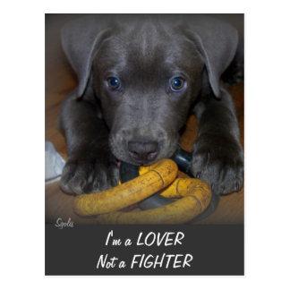 Labrabull Puppy Love Postcard Postcard