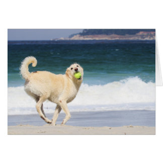 Labradoodle - Happy Day on the Beach Greeting Card