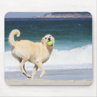 Labradoodle Happy Day on the Beach Mouse Pad