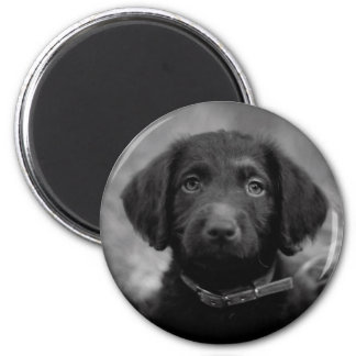 Labradoodle in B&W Badge 6 Cm Round Magnet