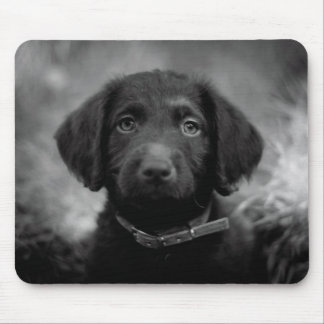 Labradoodle in B&W Mousemat