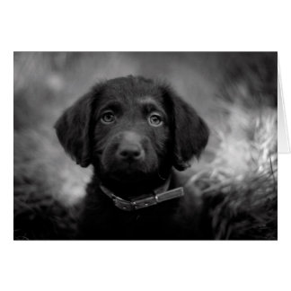 Labradoodle in B&W Notecard Note Card