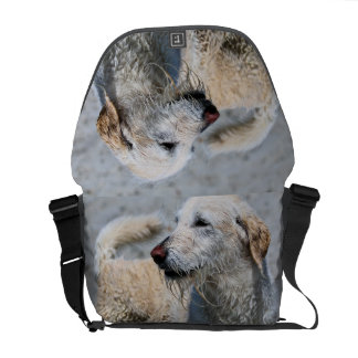Labradoodle - Izzy Courier Bags